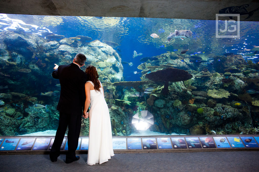 Aquarium Of The Pacific Long Beach Jg Wedding